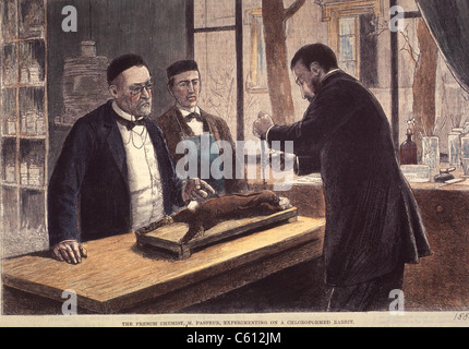 Louis Pasteur (1822-1895), French chemist and microbiologist, experimenting on a chloroformed rabbit during his - Stock Photo