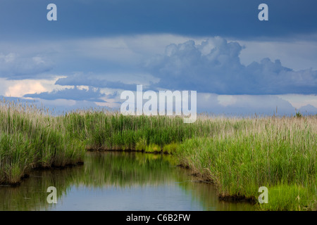 Fecund estuary in Bivalve, New Jersey - Stock Photo