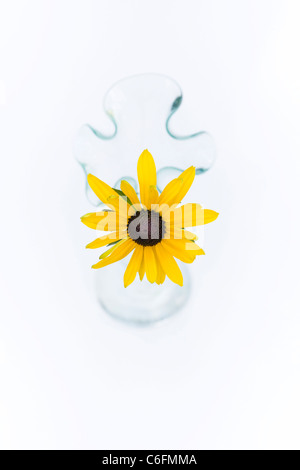 Rudbeckia Hirta. Coneflower. Single flower stem in a glass vase on a white background. - Stock Photo