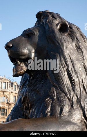 Lion part of Nelsons Column Monument in Trafalgar Square, London, England, UK - Stock Photo