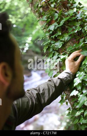 Man touching ivy growing on tree - Stock Photo