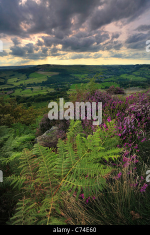 Dramatic late afternoon light over the heather and fern on Curbar Edge in the Peak District or England - Stock Photo