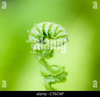 Leaves of a wood fern - Stockfoto