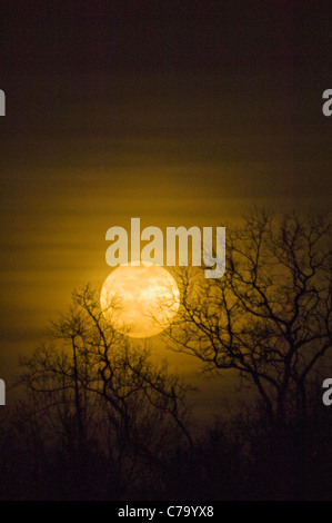 Full Moon of March 19, 2011 in Floyd County, Indiana - Closest Approach of the Moon in 18 Years. - Stock Photo