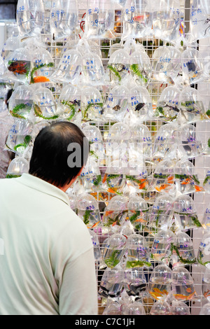Man looking at bags of goldfish hanging on wall, Goldfish Market, Mong Kok, Kowloon, Hong Kong SAR, China, Asia - Stock Photo