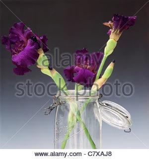 Blue iris in glass jar - Stockfoto
