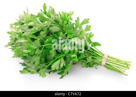 Green parsley bunch - Stock Photo