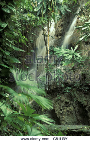Jamaica, Port Antonio, tropical rain forest - Stock Photo