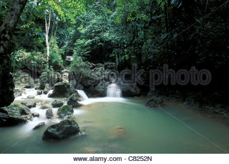 Jamaica, Port Antonio, tropical rainforest - Stock Photo
