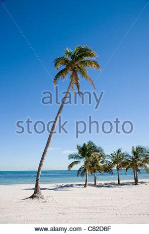 Usa, Florida, Miami, Key Byscayne, Crandon Beach, palm trees - Stock Photo