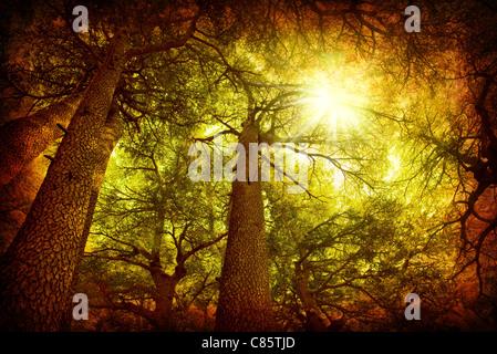Baum Zedernwald, seltene libanesischer Art, grungy Art Foto - Stockfoto
