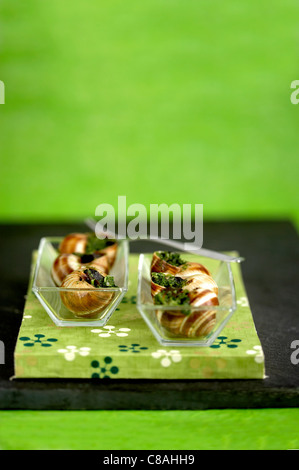 Snails from Bourgogne with parsley butter - Stock Photo