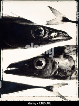 Scabbard fish heads and tails - Stock Photo
