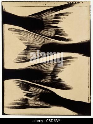 Garfish tails - Stock Photo