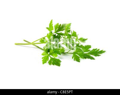 Fresh flat parsley - Stock Photo
