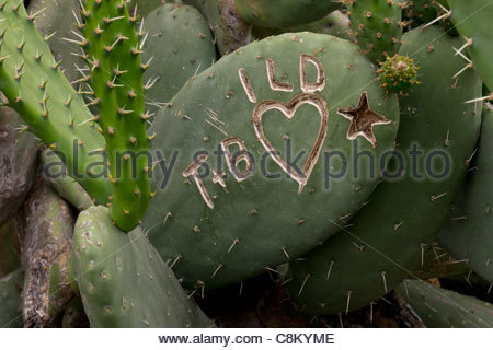 Canaries Islands: Love message on cactus near Masca in Tenerife - Stock Photo