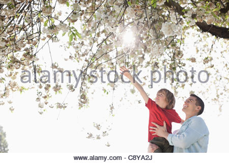 Father and son playing under tree outdoors - Stock Photo