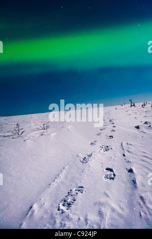 Foot prints in the snow leading off into the distance. White mountains, Interior Alaska. - Stock Photo