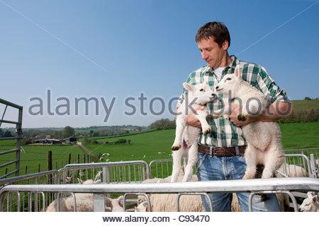 Shepherd holding lambs in pasture - Stock Photo