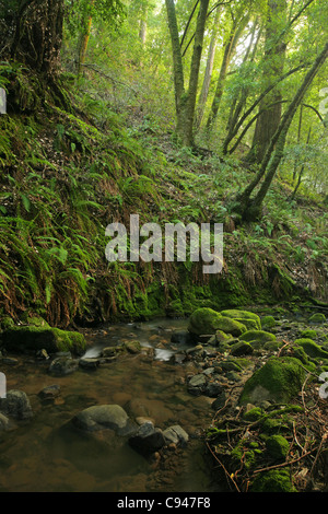 brook in the tropical rain forest at Mount Kinabalu ...