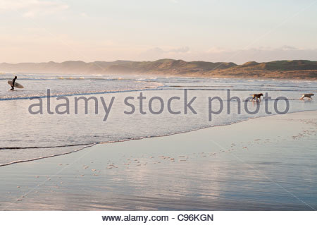 surfer getting out of water with his dogs running in front on beach through water - Stock Photo