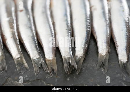 Raw anchovies, cropped - Stock Photo