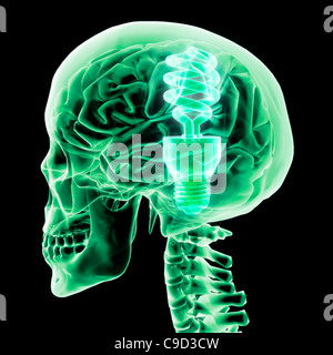 Brain with green light bulb II, Digitally Generated Image by Hank Grebe - Stock Photo