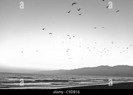 A flock of birds flying over the Pacific Ocean at Santa Monica Bay, Los Angeles, California, USA - Stock Photo