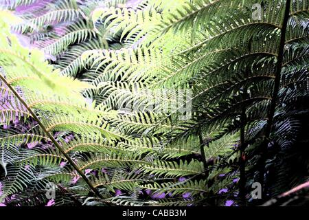 Jun 03, 2004; Los Angeles, CA, USA; Fern plants. - Stock Photo