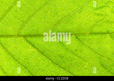structure of leaf natural background - Stock Photo