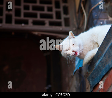 White cat on the roof, Beijing, China - Stockfoto