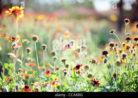 Closeup of wildflowers,Shallow Dof. - Stock Photo