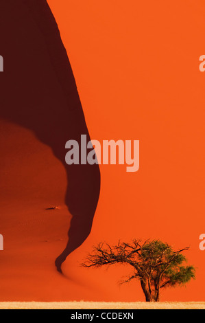 Tree in front of red sand dune of the Sossusvlei / Sossus Vlei in the Namib desert, Namibia, South Africa - Stock Photo