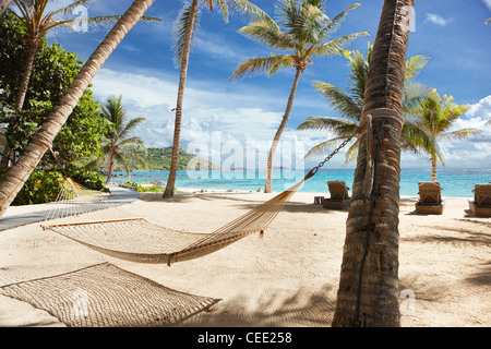 beach hammock palm trees - Stock Photo