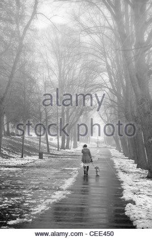 dog walker in a misty park - Stock Photo