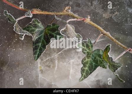 Ivy edged with frost against cracked ice background - Stock Photo