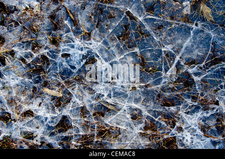 Cracked water ice on frozen bog. Closeup natural winter background backdrop. - Stock Photo