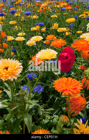 traditional english flowers planted in gardens of Souter