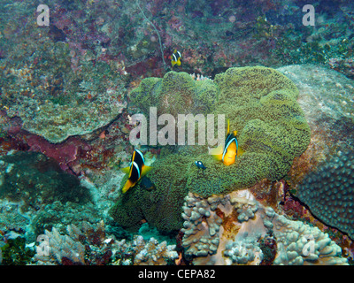 Tropical reef fish with brain coral underwater in the for Closest fish store