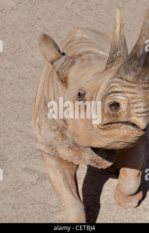 Rhinoceros close up - Stock Photo
