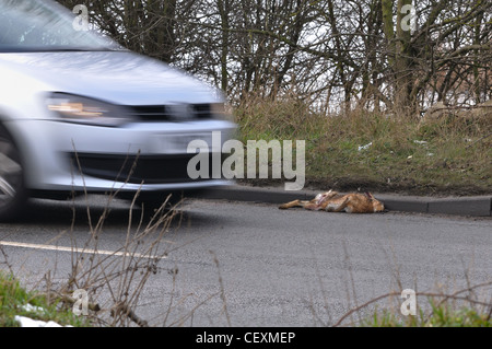 Roadkill laying at the side of the road - Stock Photo