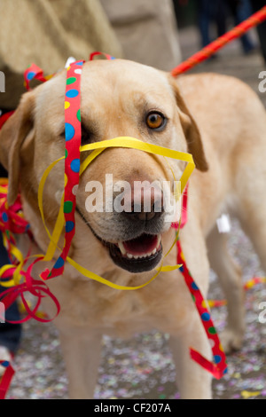 A dog entangled in paper decoration at ZueriCarneval Fasnacht move February 26, 2012 in Zurich, Switzerland. - Stock Photo