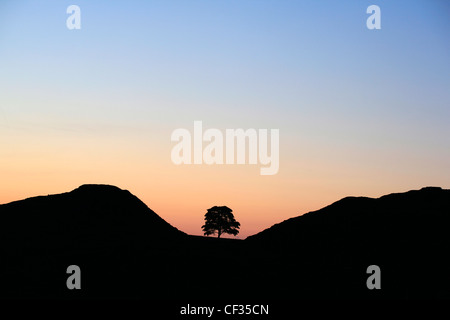 Sycamore Gap at Hadrian's Wall in silhouette. - Stock Photo