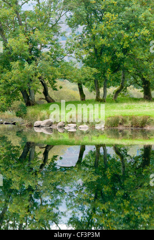 Trees relfected on the still surface of Elter water in the Lake District. - Stock Photo
