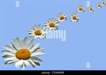 A daisy chain digitally created on a blue background - Stock Photo