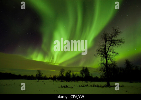 Aurora borealis (northern lights) curtains of light above trees in Elk Island National Park, Alberta, Canada. - Stock Photo