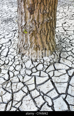 Trunk of a tree and cracked clay mud in the Red River Valley. Winnipeg, Manitoba, Canada. - Stock Photo