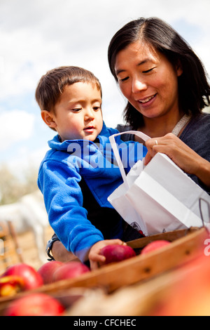 a mother and her 2.5 year old son select apples from a bucket. - Stock Photo