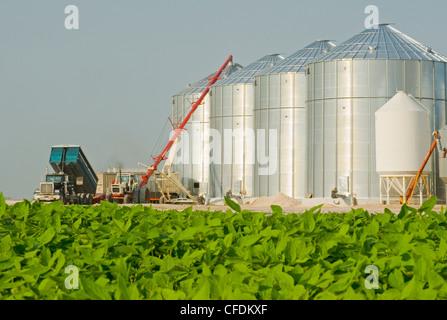 Mid growth soybean field, grain bins(silos) in the background, Lorette, Manitoba, Canada - Stock Photo