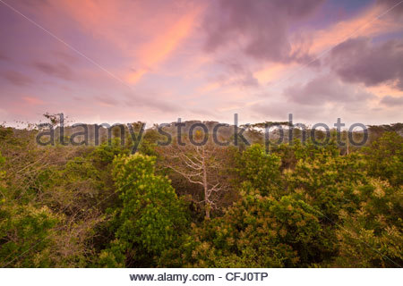 Dawn in the rainforest of Soberania national park, Republic of Panama. - Stock Photo